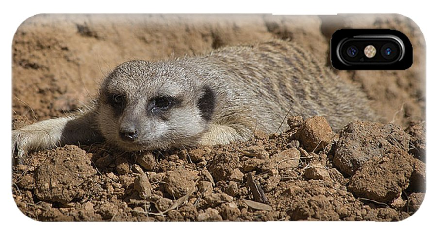 Meerkat IPhone X Case featuring the photograph Flatout by TN Fairey