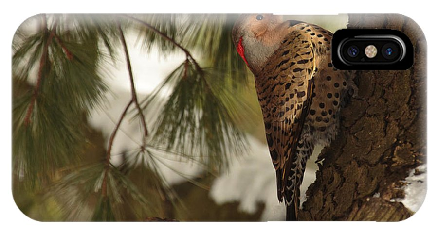 Bird IPhone X Case featuring the photograph Flicker by Everet Regal