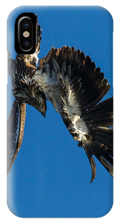 Bald Eagle IPhone X Case featuring the photograph Flight Acclimation by Nathan Harker