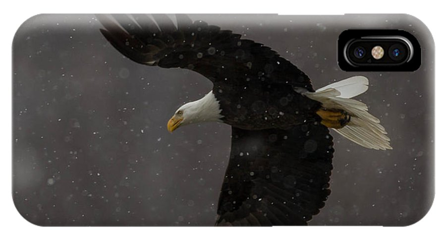 Bald Eagle IPhone X Case featuring the photograph Flight In Snow by Nathan Harker