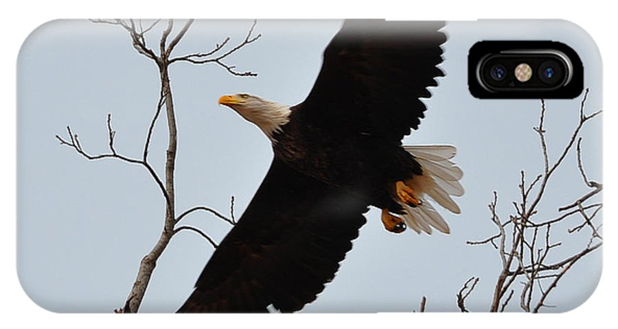 Eagle IPhone X Case featuring the photograph Flight by Terry Anderson