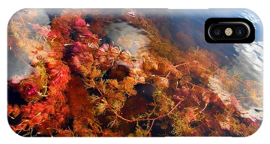 Blue IPhone X Case featuring the photograph Floating Algae by Sylvie Bouchard