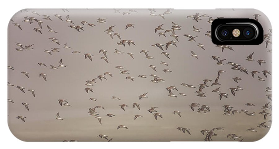 Tofino IPhone X Case featuring the photograph Flock Of Plovers by Christopher Kimmel