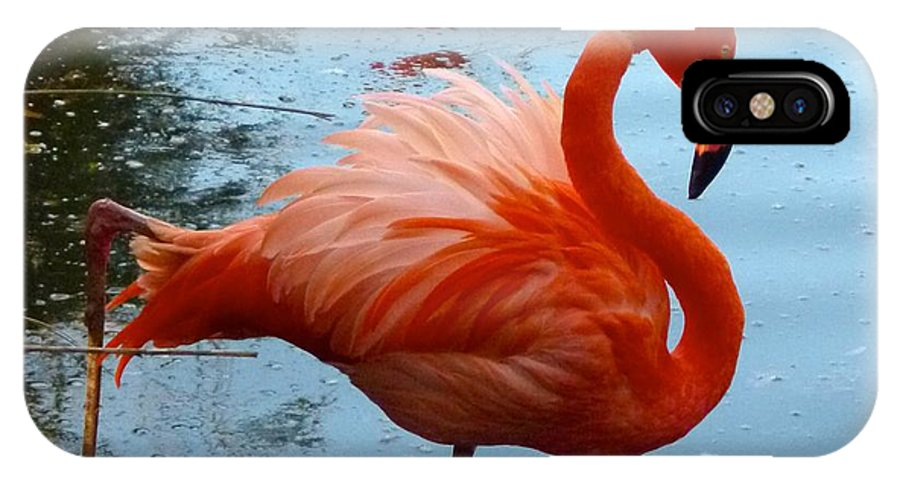 Flamingo IPhone X Case featuring the photograph Florida Flamingo by Richard Bryce and Family