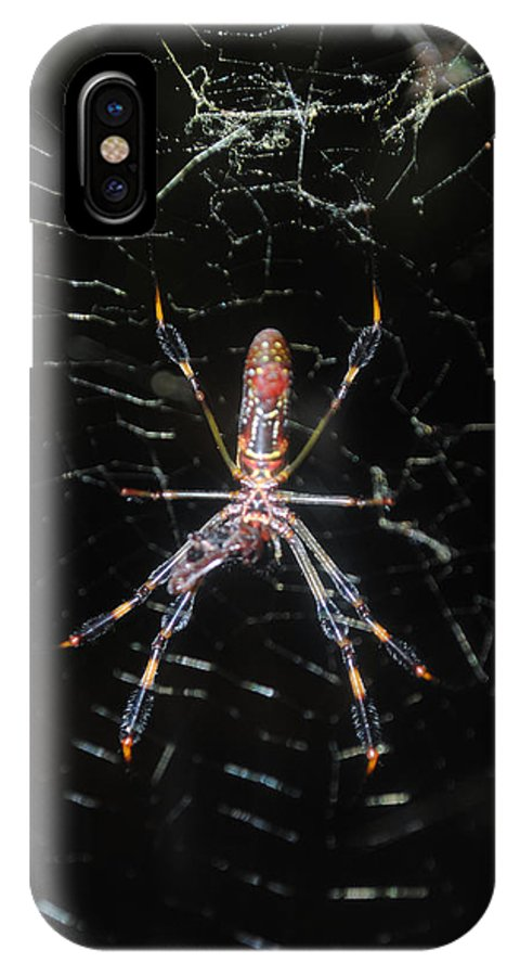 Araneae IPhone X Case featuring the photograph Insect Me Closely by George D Gordon III