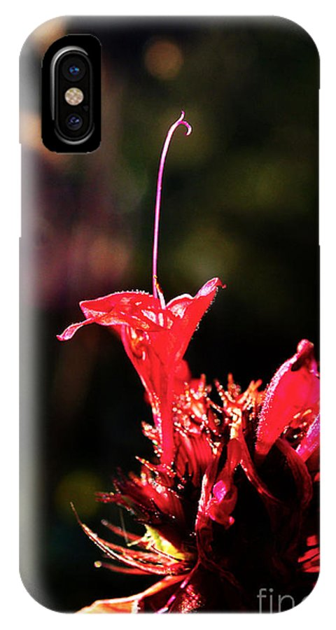 Flower IPhone X Case featuring the photograph Flower 7 by Bener Kavukcuoglu