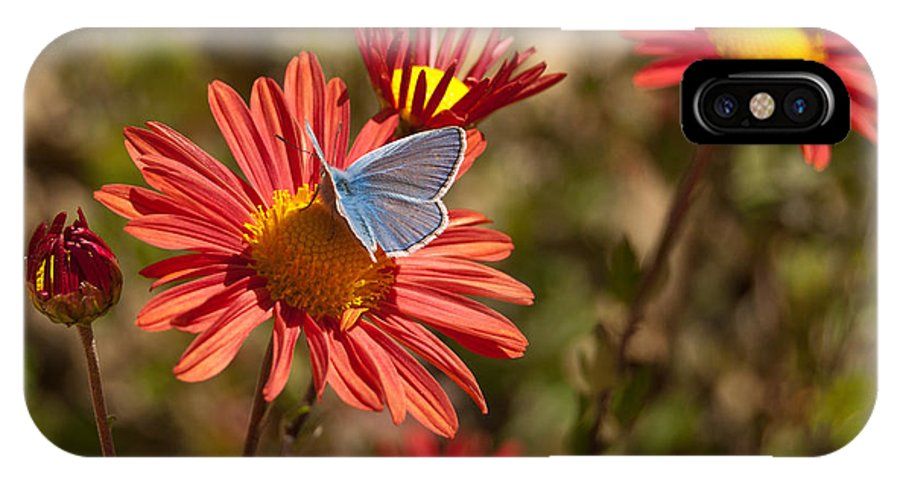 Flower IPhone X Case featuring the photograph Flower And Butterfly by Mariana Atanasova
