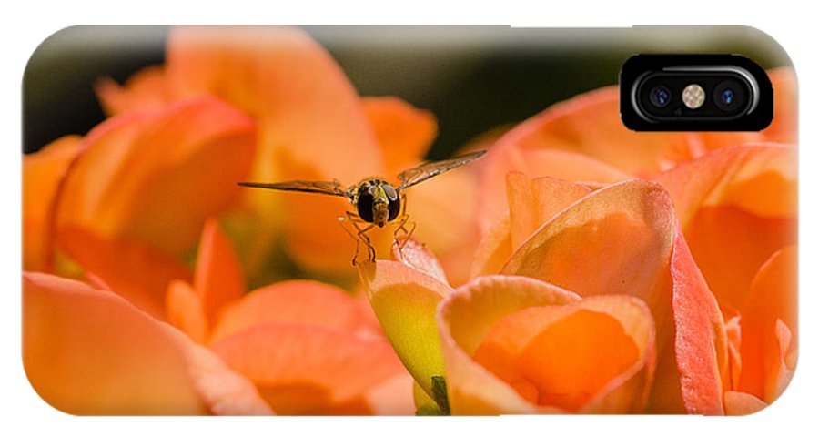 Photograph IPhone X Case featuring the photograph Flower And Ready To Fly by Ismo Raisanen