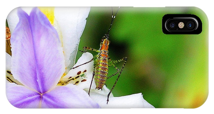 Flower IPhone X Case featuring the photograph Flower Bug - I by April Dunlap