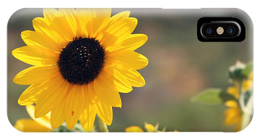 Flower IPhone X Case featuring the photograph Flower by Cameron Quade