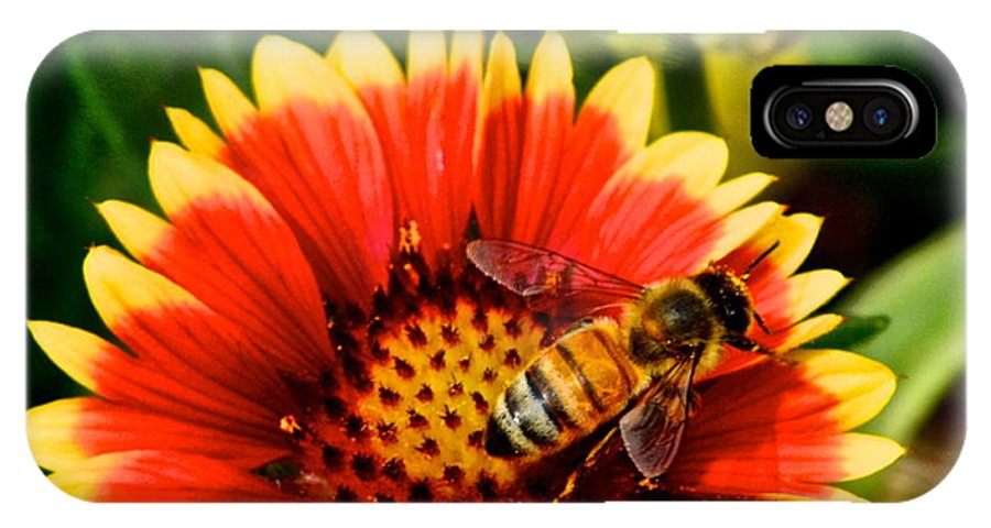 Flower IPhone X Case featuring the photograph Flower Garden by Frozen in Time Fine Art Photography