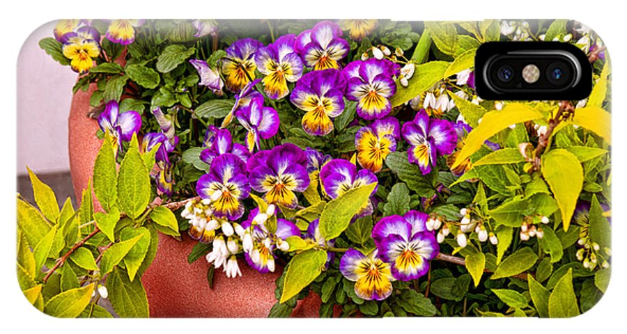 Pansy IPhone X / XS Case featuring the photograph Flower - Pansy - Purple Posies by Mike Savad