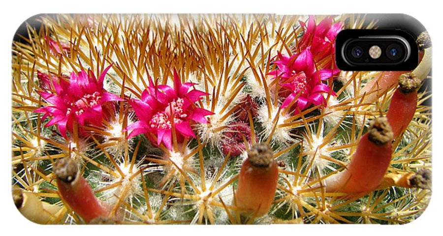 Cactus IPhone X Case featuring the photograph Flowering Cactus by C Ray Roth