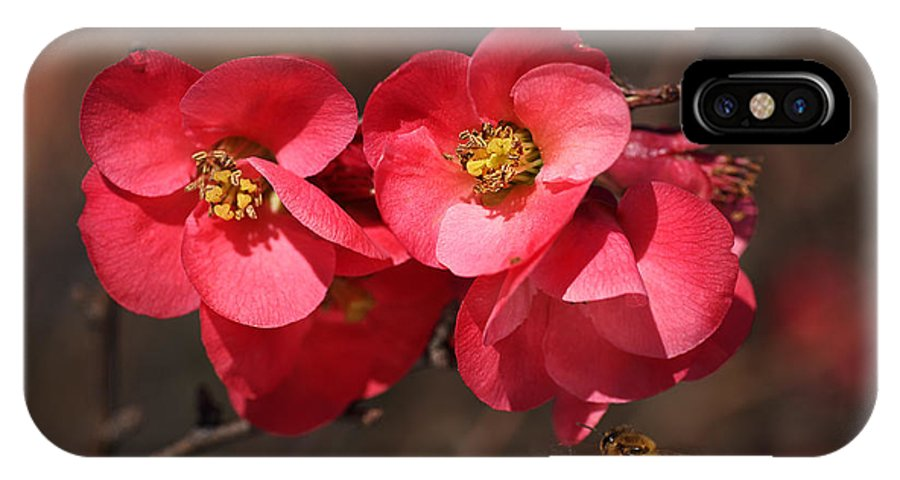 Bubbleblue IPhone X Case featuring the photograph Flowering Quince With Bee by Joy Watson