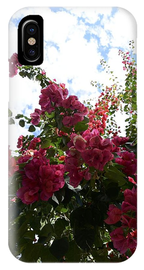 Flower IPhone X Case featuring the photograph Flowering Skyward by William Hallett