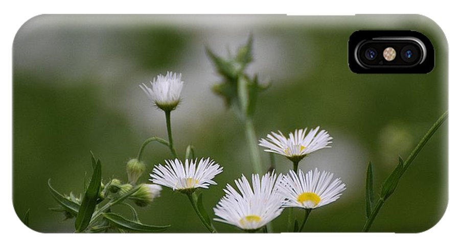 Flowers IPhone X / XS Case featuring the photograph Flowers 155 by Lawrence Hess