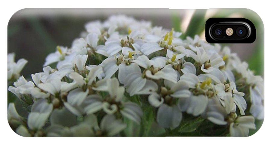Close IPhone X Case featuring the photograph Flowers Close-up by Connor McCullough
