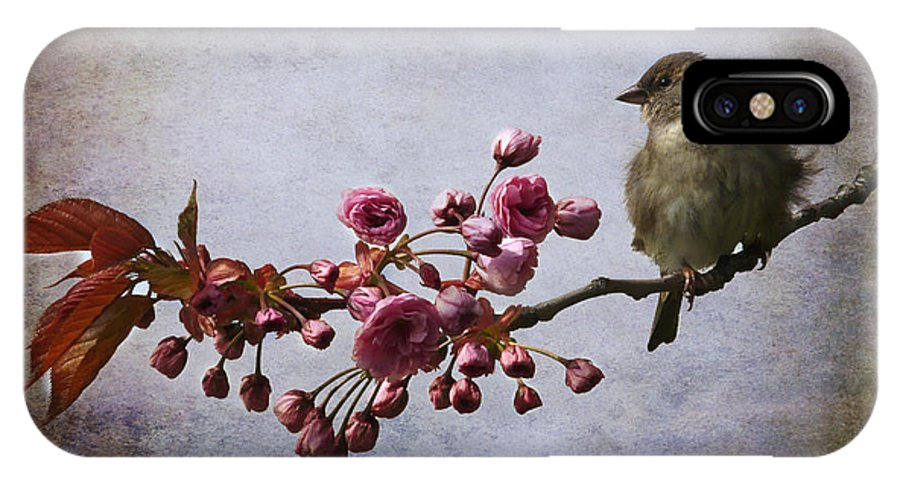 Sparrow IPhone X Case featuring the photograph Fluffy Sparrow by Barbara Orenya