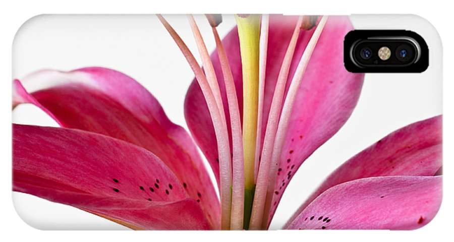 Fluttering Lily IPhone X Case featuring the photograph Fluttering Lily by Christi Kraft