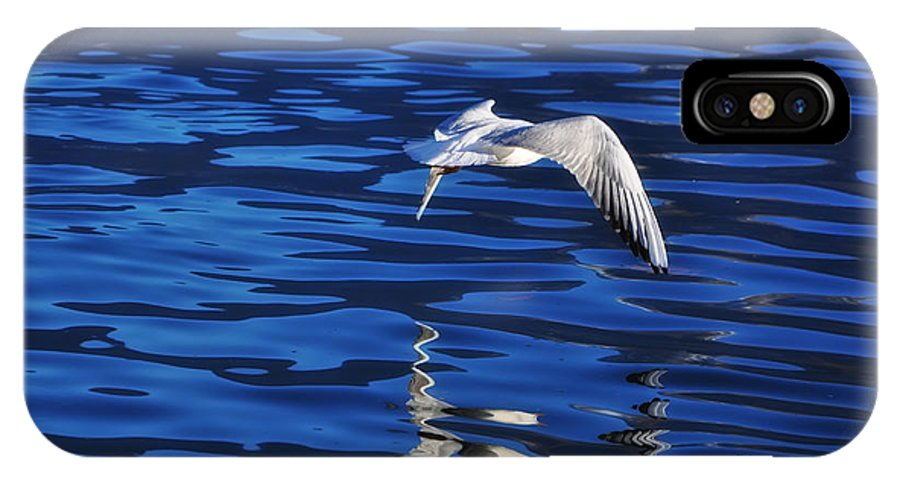 Bird IPhone X Case featuring the photograph Flying Bird by Mats Silvan