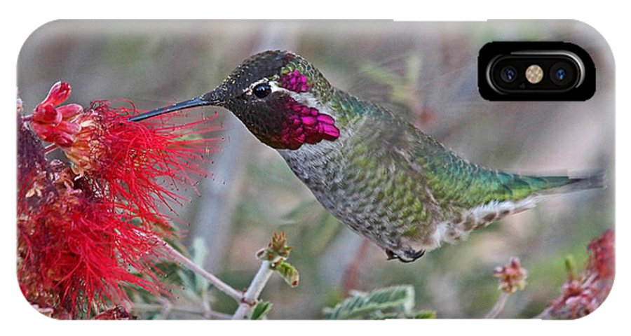 Birds IPhone X Case featuring the photograph Flying Colors by John Kulberg