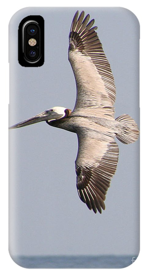 Fauna IPhone X Case featuring the photograph Flying Pelican by Mariarosa Rockefeller