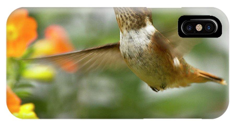 Bird IPhone X Case featuring the photograph Flying Scintillant Hummingbird by Heiko Koehrer-Wagner