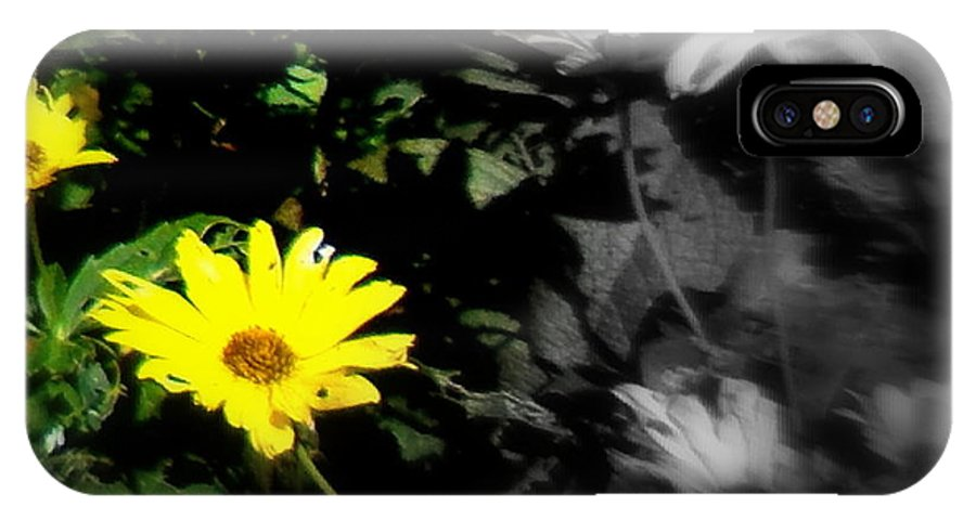 Flower IPhone X / XS Case featuring the photograph Focus On 2 Yellow Daisies by Pamela Hyde Wilson