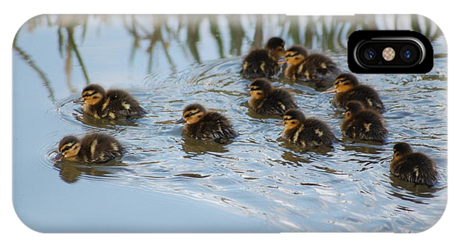 Ducklings IPhone X Case featuring the photograph Follow The Leader by Harvey Scothon