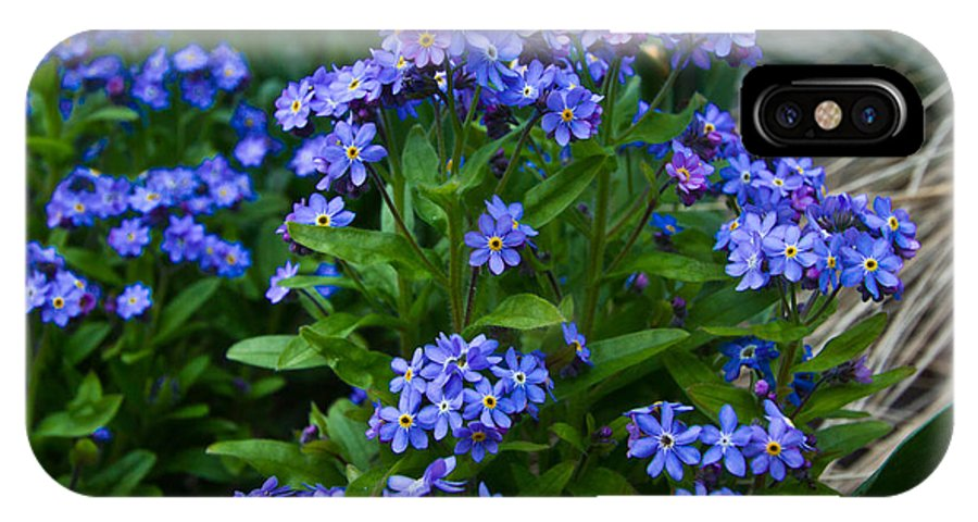 Forget Me Not IPhone X Case featuring the photograph Forget Me Not by Eti Reid