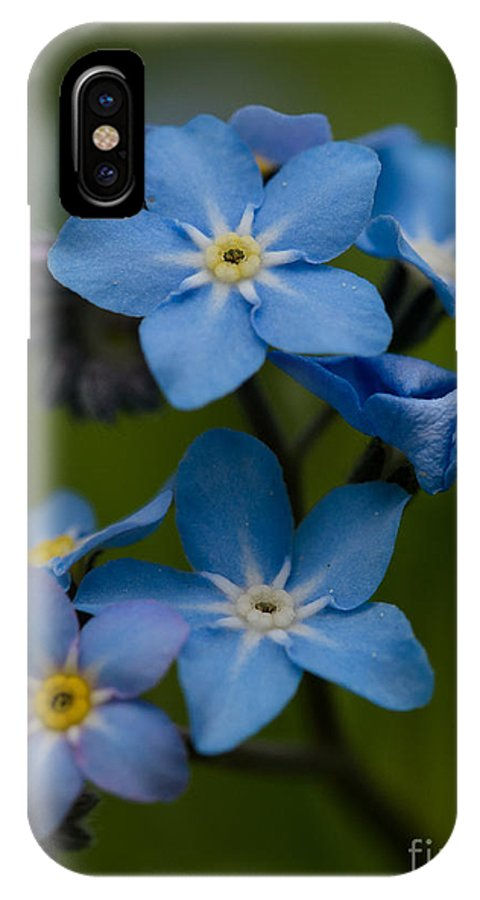 Forget Me Not Flower IPhone X Case featuring the photograph Forget Me Not Flower by Brothers Beerens