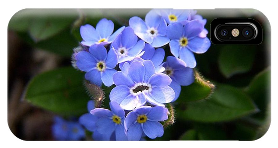 Forget-me-not IPhone X Case featuring the photograph Forget-me-not by Terri Waselchuk