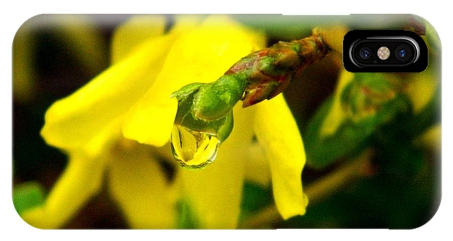 Forsythia IPhone X Case featuring the photograph Forsythia's Reflection by Terri Waselchuk