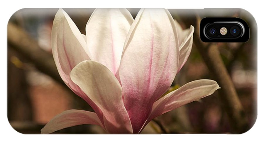 Magnolia IPhone X Case featuring the photograph Found On A Walk by Allan Morrison