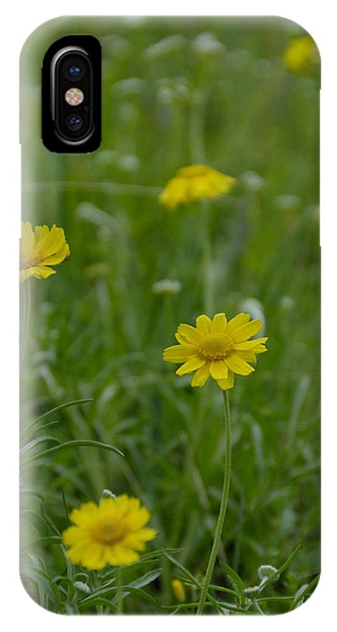 Daisy IPhone X Case featuring the photograph Four Nerve Daisy by Charles Beeler