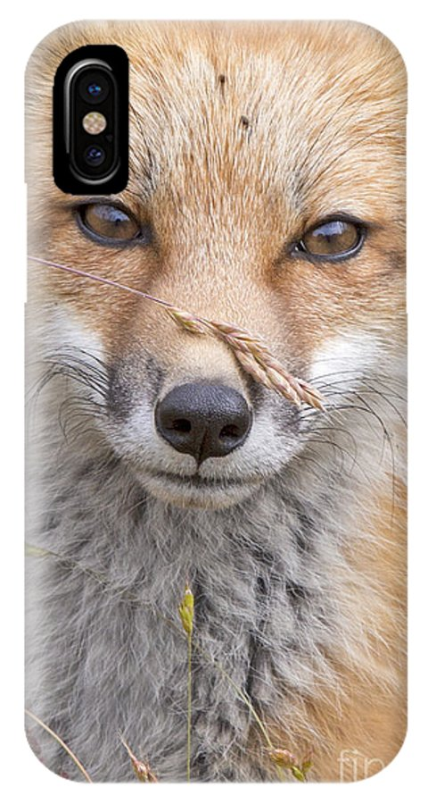 Red Fox IPhone X Case featuring the photograph Fox Kit In The Grass by Jeff McGraw