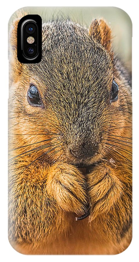 Fox Squirrel IPhone X Case featuring the photograph Fox Squirrel by Andrew Lawlor