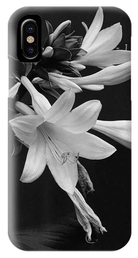Flowers IPhone X Case featuring the photograph Fragrant Plantain Lily by J. Horace McFarland