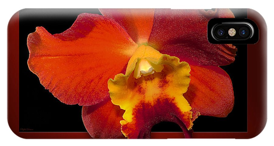 Orchid IPhone X Case featuring the photograph Framed Red Orchid by Phyllis Denton
