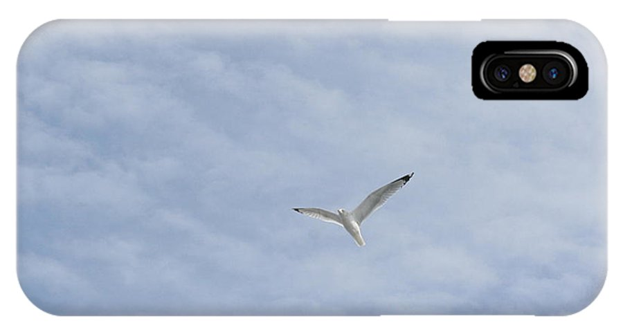 Winter IPhone X Case featuring the photograph Free Flying by Karen Silvestri