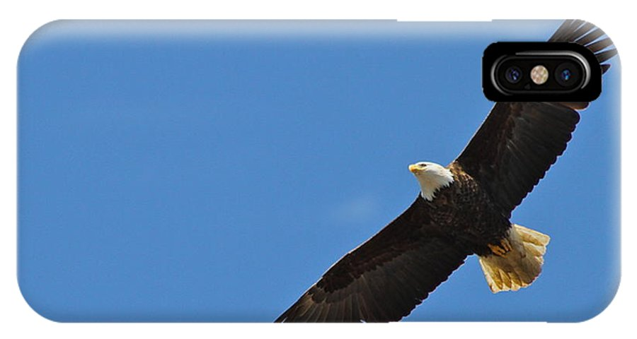Eagle IPhone X Case featuring the photograph Freedom by Rick Monyahan