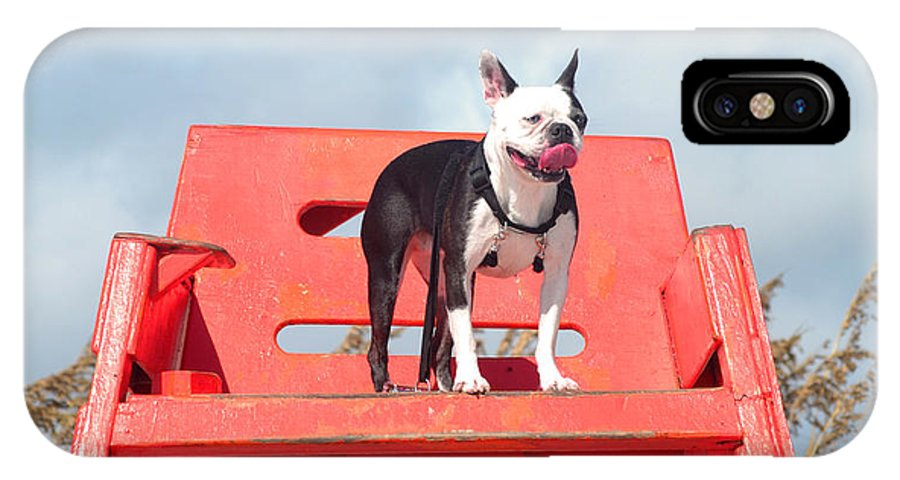 Boston Terrier IPhone X Case featuring the photograph Frida On Watch by Sherry Dooley