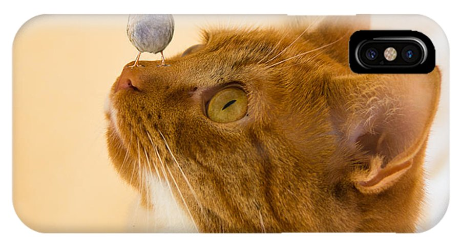 Animals IPhone X Case featuring the photograph Friend Or Foe by Brian Roscorla