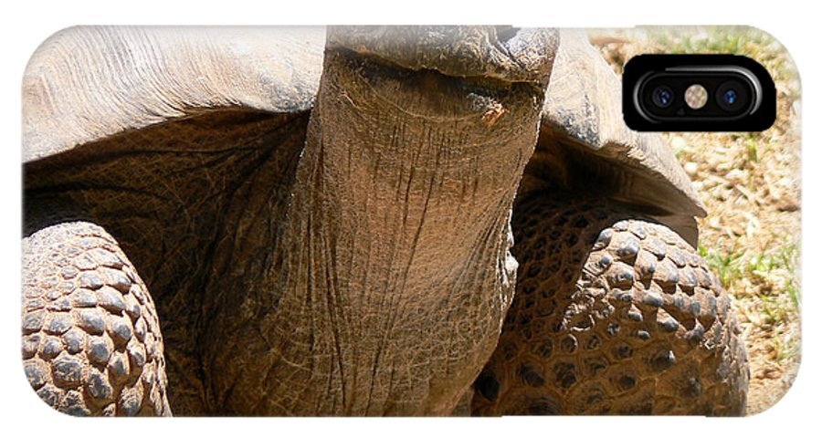 Tortoise IPhone X Case featuring the photograph Friendly Tortoise by Laurel Powell