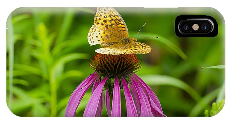 Butterfly IPhone X Case featuring the photograph Fritilarie Butturfly On Purple Cone Flower by David Tennis