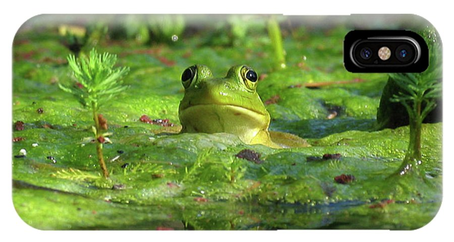 Frog IPhone X Case featuring the photograph Frog by Douglas Stucky