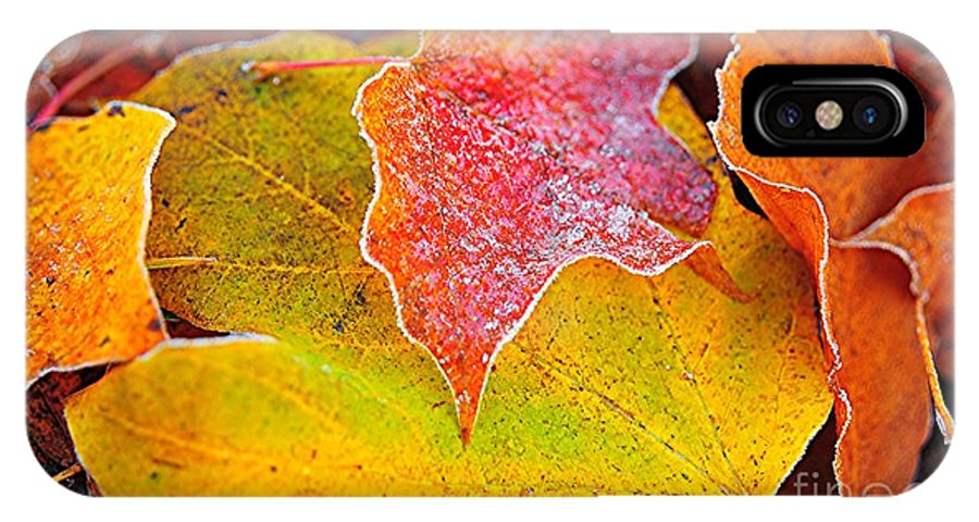 Frost IPhone X Case featuring the photograph Frosted by Terri Gostola
