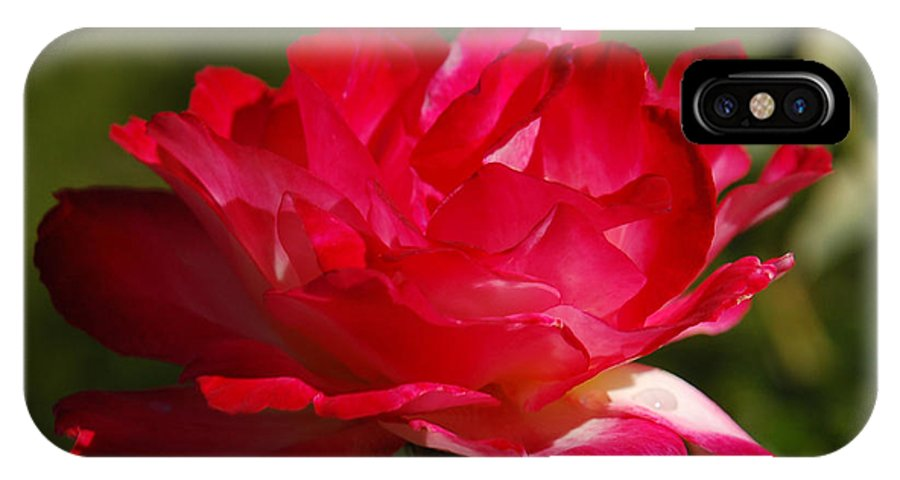 Floral IPhone Case featuring the photograph Fuchsia by Suzanne Gaff