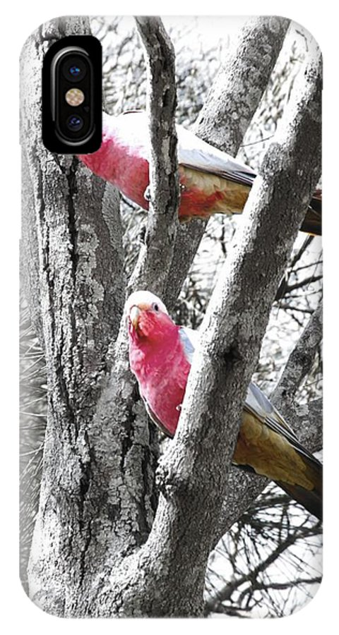 Parrots IPhone X Case featuring the photograph Galahs In A Tree by Pierre Roux