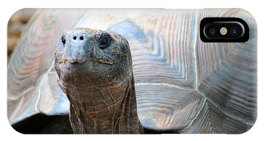 Galapagos Tortoise IPhone X Case featuring the photograph Galapagos Tortoise 1 by Sheri McLeroy